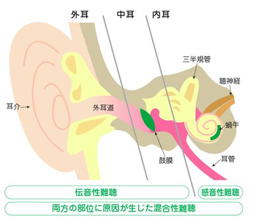 耳の構造と役割
